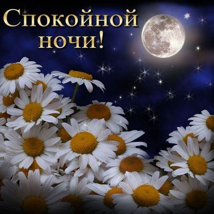 Яркая, красивая открытка спокойной ночи, сладких снов! Ромашки под полной луной в звёздном небе. Скачать открытку спокойной ночи бесплатно онлайн! скачать открытку бесплатно | 123ot