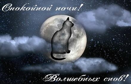 Яркая, красивая открытка спокойной ночи, сладких снов! Силуэт кошки на фоне ночной луны. Скачать открытку спокойной ночи бесплатно онлайн! скачать открытку бесплатно | 123ot
