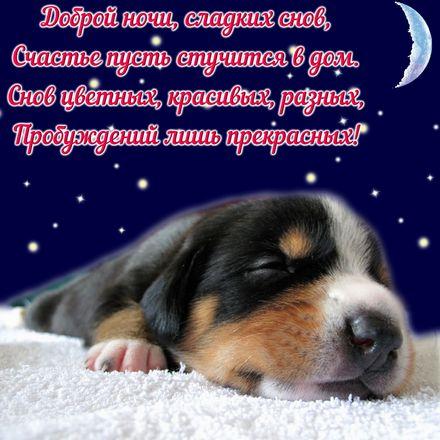 Яркая, красивая открытка спокойной ночи, сладких снов! Симпатичный пёсик и пожелание сладких снов. Скачать открытку спокойной ночи бесплатно онлайн! скачать открытку бесплатно | 123ot