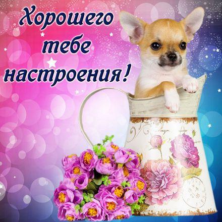 Яркая, красивая открытка хорошего настроения! Собачка в красивом оформлении. Скачать открытку хорошего настроения бесплатно онлайн! скачать открытку бесплатно | 123ot