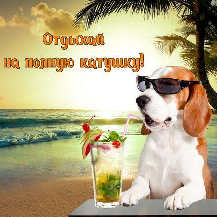 Яркая, красивая открытка на тему отпуска! Собачка в очках с коктейлем у моря. Скачать открытку хорошего отпуска, хорошо отдохнуть бесплатно онлайн! скачать открытку бесплатно | 123ot