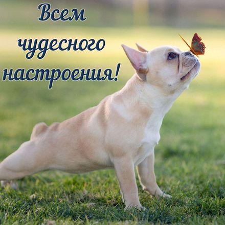 Яркая, красивая открытка хорошего настроения! Забавный песик с бабочкой на носу. Скачать открытку хорошего настроения бесплатно онлайн! скачать открытку бесплатно | 123ot