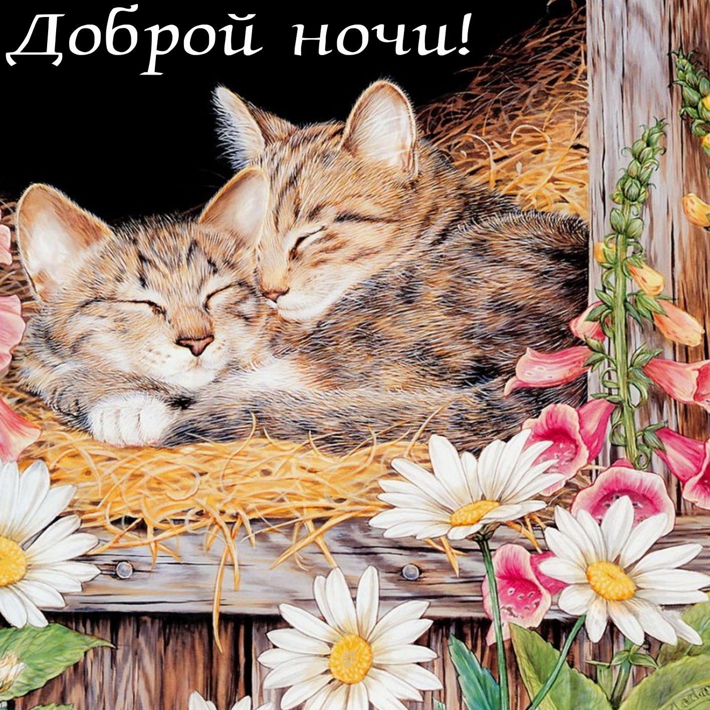 Мерцающие красивые открытки с цветами и зверями с спокойной ночи, днем