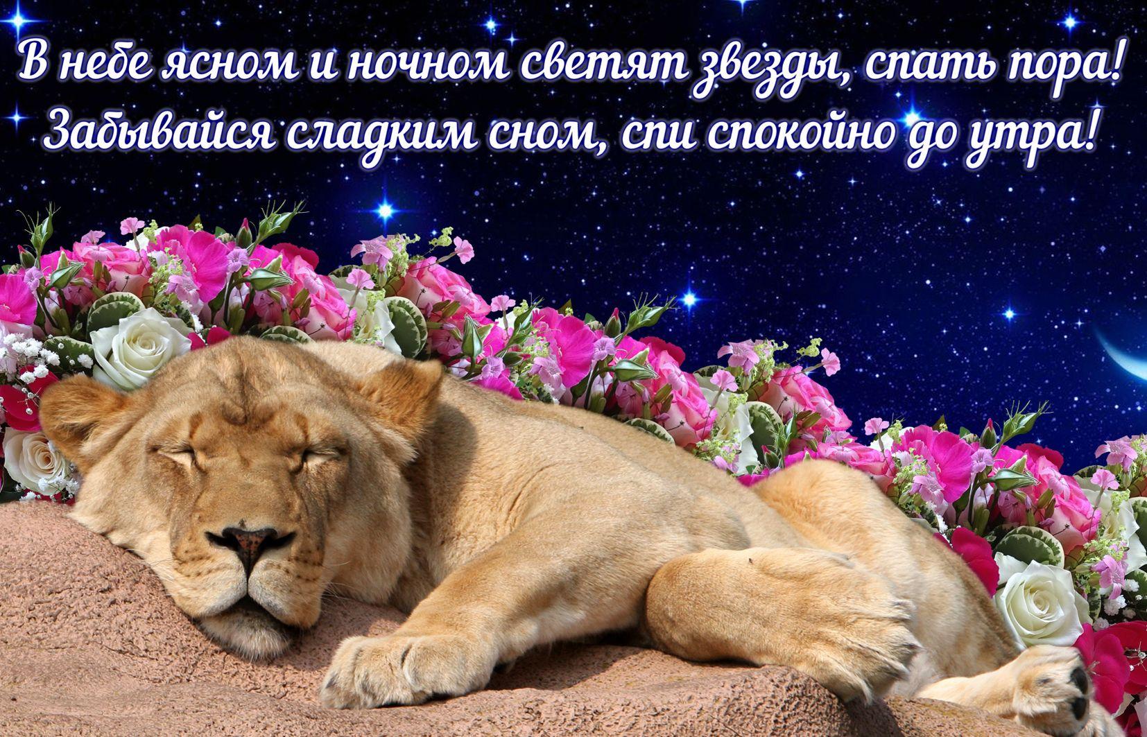 Разными, картинки спокойной ночи и сладких снов с цветами