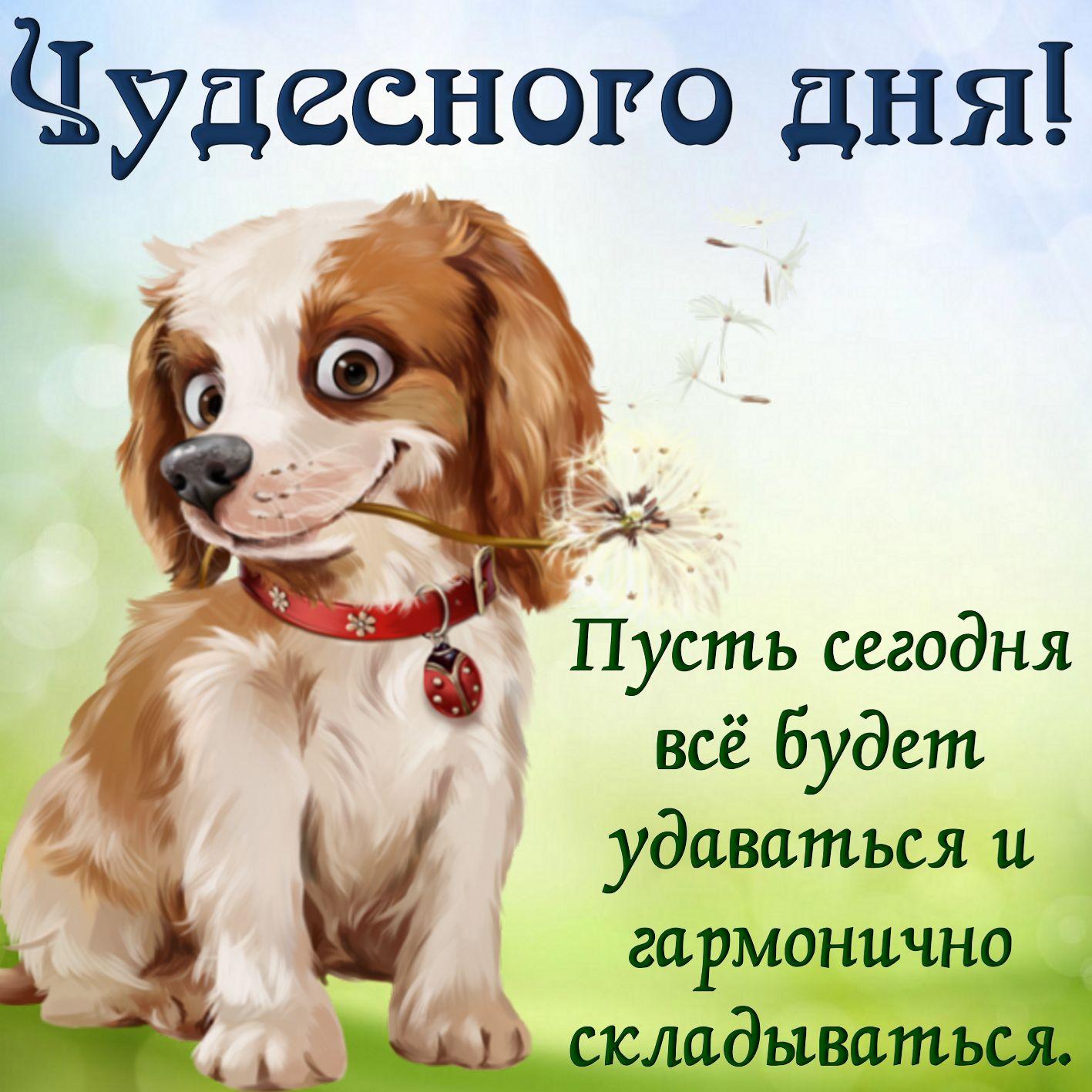 Пожелать хорошего дня подруге открытки