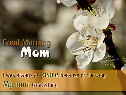 Белые цветочки! Доброе утречко, мамуля, картинки доброе утро мама, с добрым утром мама, доброе утро мама картинки, доброе утро мама картинки красивые, скачать картинки с добрым утром мама! скачать открытку бесплатно   123ot