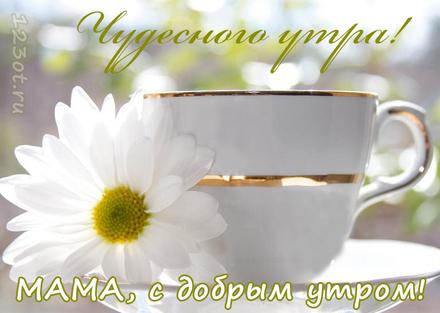 Доброе утро, мама! Доброе утро, мама! Чай с ромашкой! Картинки, доброе утро мама! Картинки красивые! Открытки с добром утром маме! скачать открытку бесплатно | 123ot