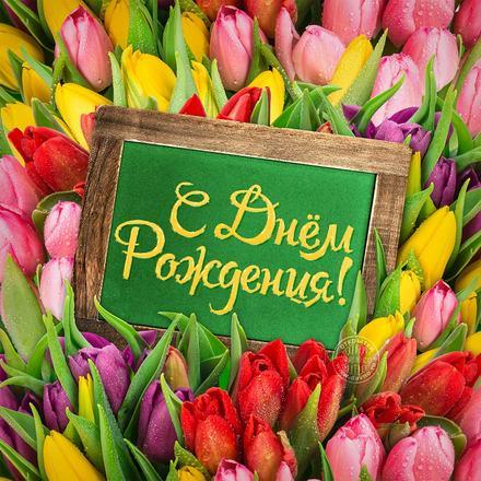 Море тюльпанов! Красивые открытки с днём рождения женщине для вацап, whatsapp! Скачать бесплатно онлайн! скачать открытку бесплатно | 123ot