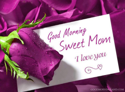 Прекрасная роза! Доброе утречко, мамуля, картинки доброе утро мама, с добрым утром мама, доброе утро мама картинки, доброе утро мама картинки красивые, скачать картинки с добрым утром мама! скачать открытку бесплатно   123ot