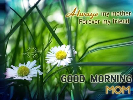 Зелень. Цветы. Доброе утречко, мамуля, картинки доброе утро мама, с добрым утром мама, доброе утро мама картинки, доброе утро мама картинки красивые, скачать картинки с добрым утром мама! скачать открытку бесплатно | 123ot