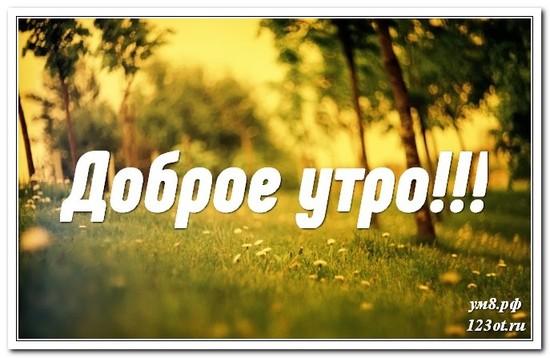 Картинка, открытка, природа, доброе утро поделиться в whatsApp бесплатно! скачать открытку бесплатно | 123ot