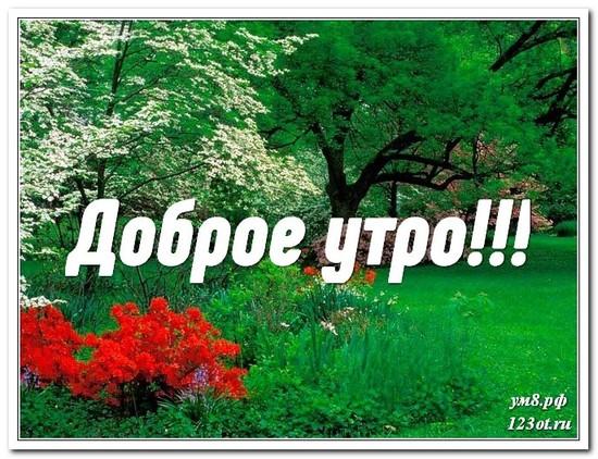 Картинка, открытка, природа, доброе утро поделиться в whatsApp друзьям! скачать открытку бесплатно | 123ot