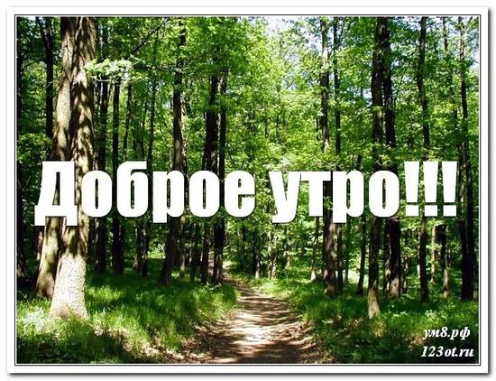 Картинка с красивой природой, с добрым утром поделиться в вацап онлайн! скачать открытку бесплатно | 123ot