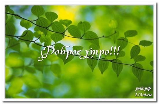 Картинка с природой, доброе утро поделиться в вацап друзьям! скачать открытку бесплатно | 123ot