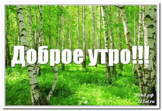 Картинка с природой, доброе утро скачать бесплатно! скачать открытку бесплатно | 123ot