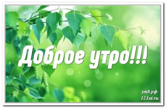 Открытка с красивой природой, доброе утро поделиться в whatsApp бесплатно! скачать открытку бесплатно | 123ot
