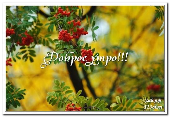 Открытка с природой, доброе утро поделиться в вацап онлайн! скачать открытку бесплатно | 123ot