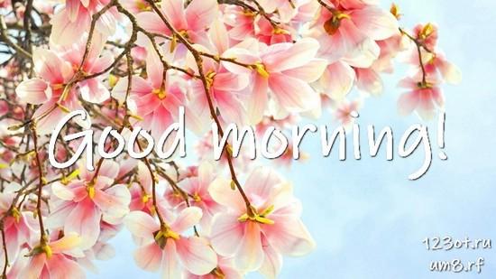 Доброе утро и отличного дня, красивая картинка, фотография с цветами для девушки, женщины скачать! скачать открытку бесплатно | 123ot