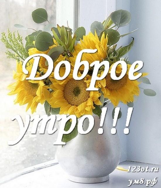 Доброе утро и отличного дня, красивая картинка, фотография с цветами женщине, жене скачать онлайн! скачать открытку бесплатно | 123ot