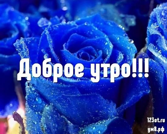 Доброе утро и отличного дня, красивая картинка, фотография с цветочками (цветы) девушке, женщине отправить на вацап! скачать открытку бесплатно   123ot