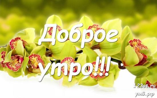 Доброе утро и отличного дня, красивая картинка, фотография с цветочками (цветы) девушке, женщине отправить на вацап! скачать открытку бесплатно | 123ot