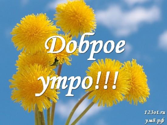 Доброе утро и отличного дня, красивая картинка, фотография с цветочками (цветы) женщине, жене скачать онлайн! скачать открытку бесплатно | 123ot