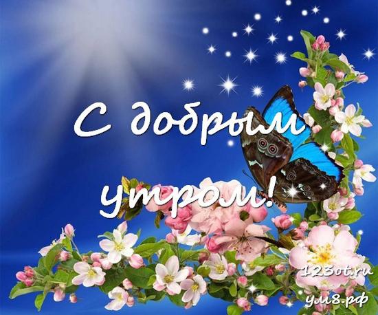 Доброе утро и отличного дня, красивая картинка, фотография с красивыми цветами для девушки, женщины скачать! скачать открытку бесплатно | 123ot
