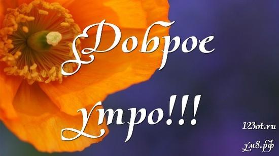 Доброе утро и отличного дня, красивая открытка, картинка с цветами девушке, женщине отправить на вацап! скачать открытку бесплатно   123ot