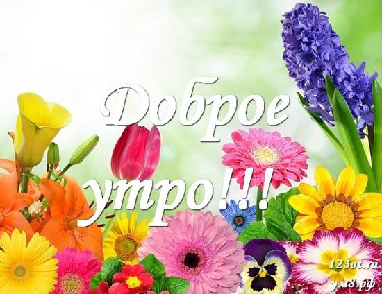 Доброе утро и отличного дня, красивая открытка, картинка с цветами для девушки, женщины скачать! скачать открытку бесплатно | 123ot