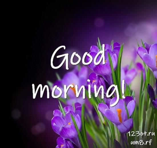 Доброе утро и отличного дня, красивая открытка, картинка с красивыми цветами для женщины, для жены скачать бесплатно! скачать открытку бесплатно | 123ot