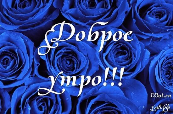 Доброе утро и отличного дня, красивая открытка, картинка с красивыми цветами женщине, жене скачать онлайн! скачать открытку бесплатно | 123ot