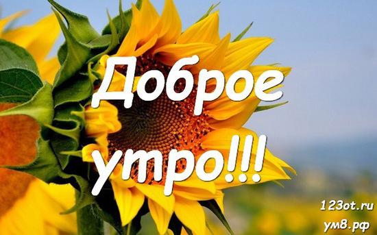 Доброе утро и отличного дня, красивая открытка, картинка с природой, с цветами для девушки, женщины скачать! скачать открытку бесплатно   123ot