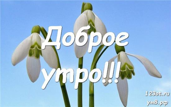 Доброе утро и отличного дня, красивая открытка, картинка с природой, с цветами для девушки, женщины скачать! скачать открытку бесплатно | 123ot