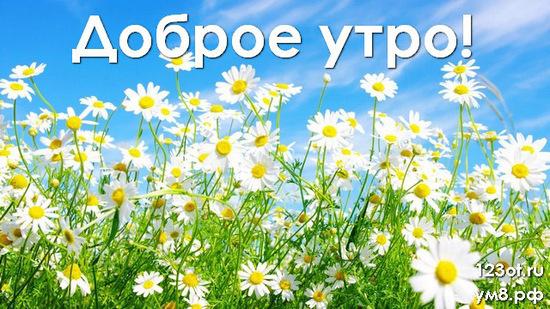 Доброе утро, красивая картинка, фотография с цветочками (цветы) женщине, жене скачать онлайн! скачать открытку бесплатно | 123ot