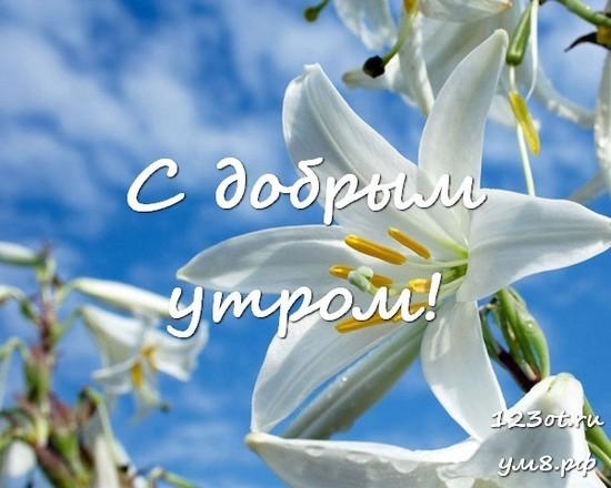 Доброе утро, красивая картинка, фотография с красивыми цветами для девушки, женщины скачать! скачать открытку бесплатно | 123ot