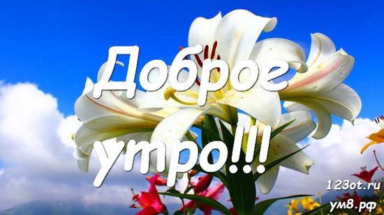 Доброе утро, красивая картинка, фотография с красивыми цветами для женщины, для жены скачать бесплатно! скачать открытку бесплатно   123ot