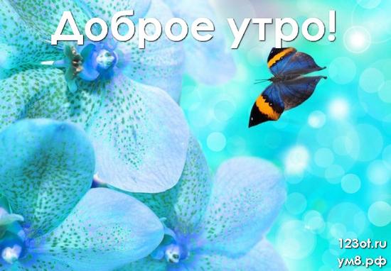 Доброе утро, красивая картинка, фотография с красивыми цветами женщине, жене скачать онлайн! скачать открытку бесплатно | 123ot