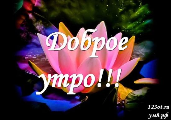 Доброе утро, красивая картинка, фотография с природой, с цветами для девушки, женщины скачать! скачать открытку бесплатно | 123ot