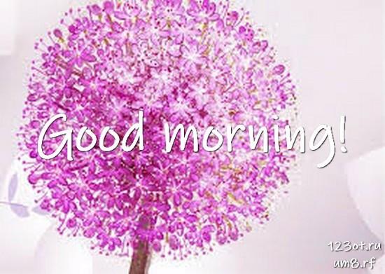 Доброе утро, красивая открытка, картинка с цветами для девушки, женщины скачать! скачать открытку бесплатно | 123ot
