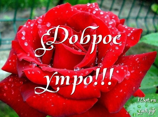 Доброе утро, красивая открытка, картинка с красивыми цветами для девушки, женщины скачать! скачать открытку бесплатно   123ot