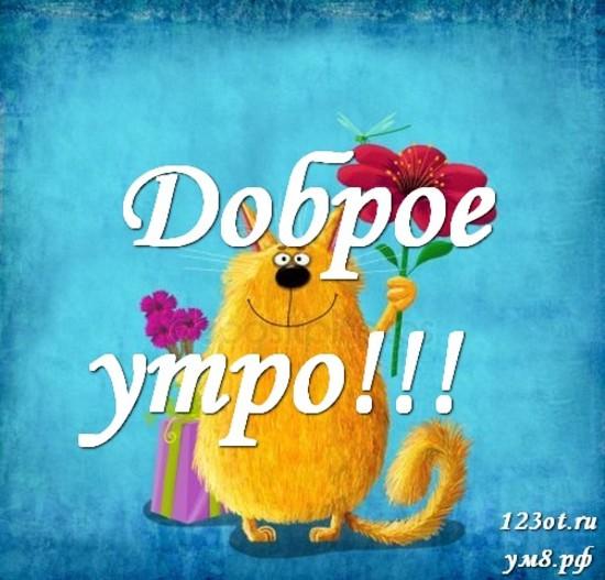Доброе утро, красивая открытка, картинка с природой, с цветами для девушки, женщины скачать! скачать открытку бесплатно   123ot