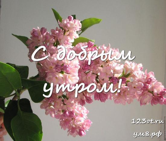 Доброго утра и хорошего дня, красивая картинка, фотография с цветами девушке, женщине отправить на вацап! скачать открытку бесплатно | 123ot