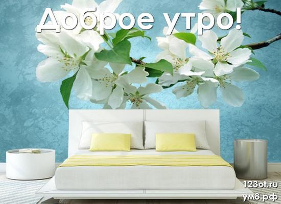 Доброго утра и хорошего дня, красивая картинка, фотография с цветами девушке, женщине отправить на вацап! скачать открытку бесплатно   123ot