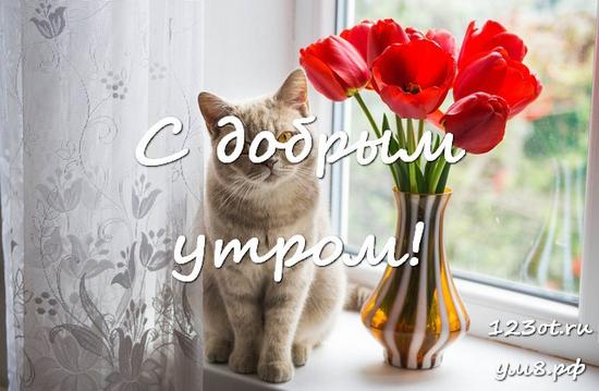 Доброго утра и хорошего дня, красивая картинка, фотография с цветами женщине, жене скачать онлайн! скачать открытку бесплатно | 123ot