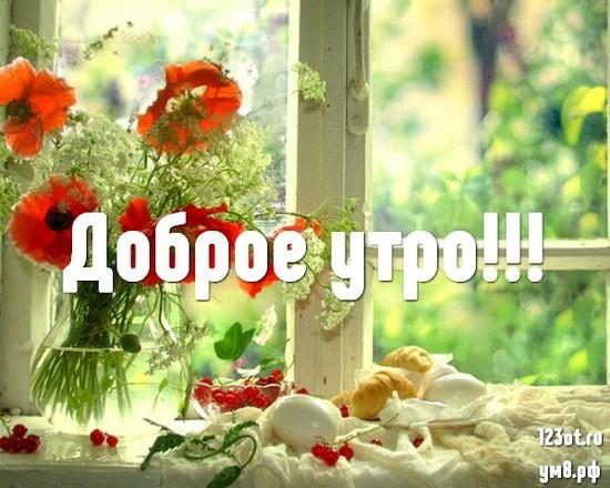 Доброго утра и хорошего дня, красивая картинка, фотография с красивыми цветами для женщины, для жены скачать бесплатно! скачать открытку бесплатно | 123ot