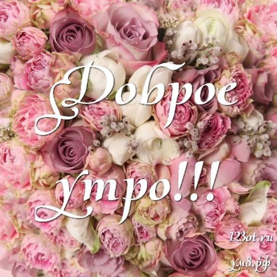 Доброго утра и хорошего дня, красивая картинка, фотография с красивыми цветами женщине, жене скачать онлайн! скачать открытку бесплатно   123ot