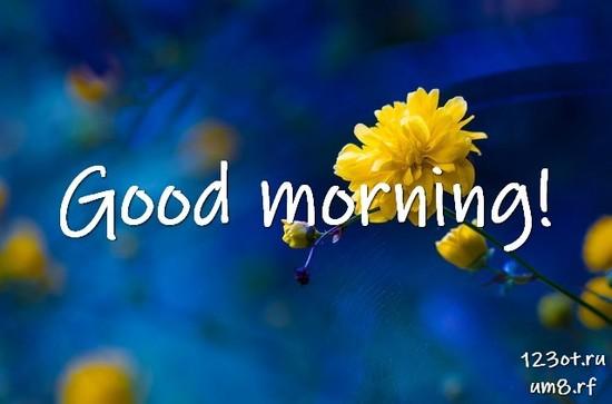 Доброго утра и хорошего дня, красивая открытка, картинка с цветочками (цветы) девушке, женщине отправить на вацап! скачать открытку бесплатно | 123ot