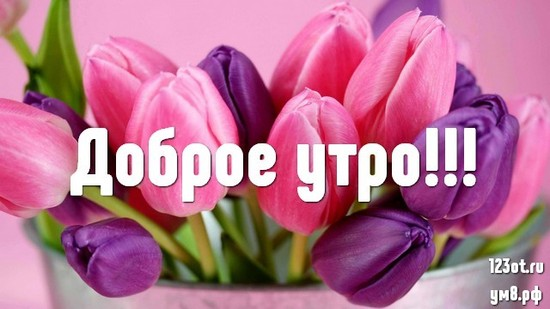 Доброго утра и хорошего дня, красивая открытка, картинка с цветочками (цветы) для женщины, для жены скачать бесплатно! скачать открытку бесплатно | 123ot