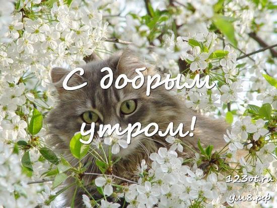 Доброго утра и хорошего дня, красивая открытка, картинка с красивыми цветами для женщины, для жены скачать бесплатно! скачать открытку бесплатно | 123ot