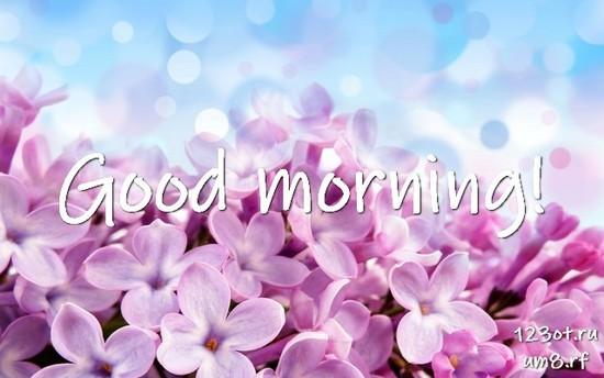 Доброго утра и хорошего дня, красивая открытка, картинка с природой, с цветами девушке, женщине отправить на вацап! скачать открытку бесплатно | 123ot